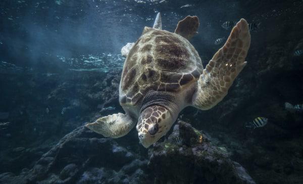 océanopolis tortue